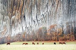 A field full of Belgian draft horses. Multiple exposure with weathered wood