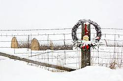 Barbed Wire Wreath hanging on Fence