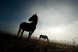 Two horses standing in field silhouetted against sky