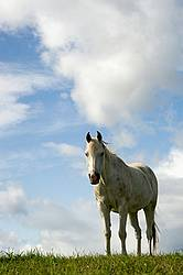 Gray horse on hilltop against sky