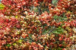 Autumn colored trees and leaves