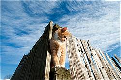 Orange and white cat sitting on fence