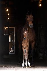 Mare and foal standing in barn doorway