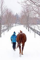 Young girl leading horse down a snowy driveway