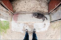Cat in barn doorway