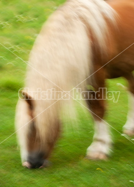 Belgian draft horse photograhed with a slow shutter speed