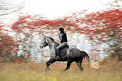 Woman riding gray horse