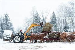 Farmer putting round bales of hay into cattle feeder