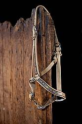 Halter hanging on stall door