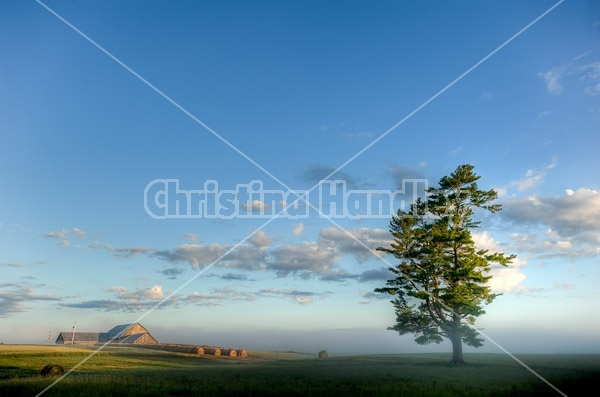 Farm scene photographed early in the morning as the sun is rising and burning off the fog