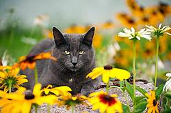Gray cat laying in garden