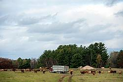 Cattle Truck in Pasture