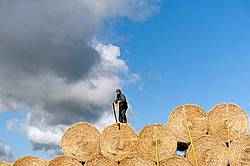Farmer loading tractor trailer with round bales of straw and getting them strapped down for transport