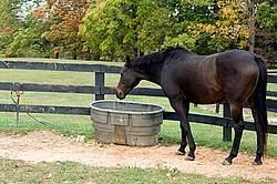Horse drinking from water trough in paddock
