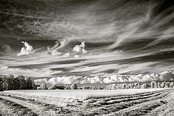 Infrared photo of hay field