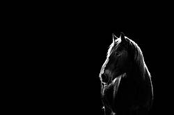 Horse in black and white backlit by the setting sun