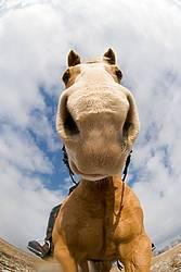 Distorted equine portrait