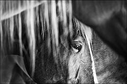 Closeup photo of a horses face