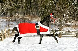 Gray horse wearing Santa Suit