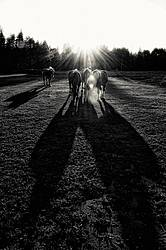 Group of horses backlit by the sun