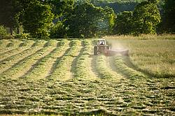 Farmer cutting hay with tractor and mower conditioner