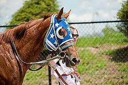 Quarter Horse Racing at Ajax Downs
