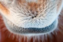 Close-up photo of horse muzzle