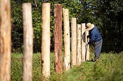 Farmer building new fence