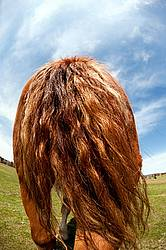 Photo of horse bum and tail