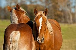 Horses interacting with each other in the spring of the year