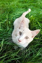 Orange cat sitting in green grass