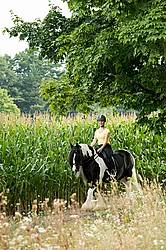 One woman riding a Gypsy Vanner horse.