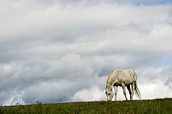 Grey horse on hilltop against big sky.