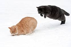 Two cats playing in the snow