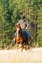 Cowboy Riding Quarter Horse Western Style