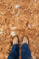 Standing in a pile of horse hair