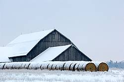 Big barn and round bales of hay in winter.