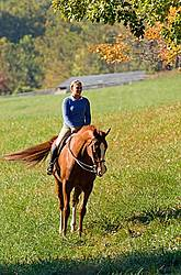 Young woman riding a chestnut horse.
