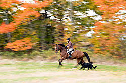 Woman riding bay horse in the fall colors