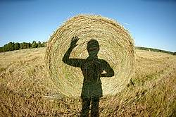 Maling fun selfie shadows on the side of a round bale of hay
