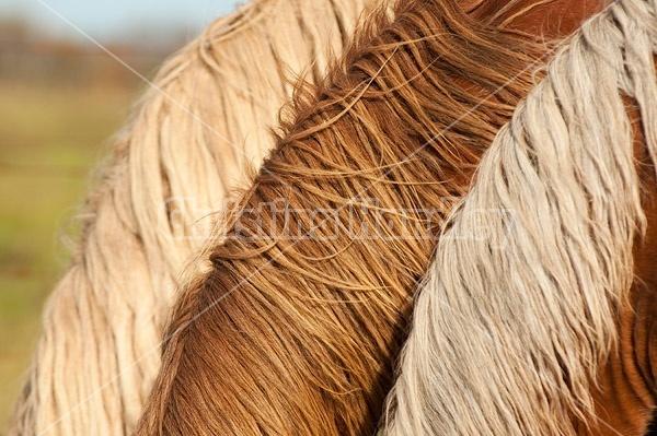 Three horse necks