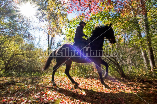 Woman horseback riding through magical forest with over hanging trees
