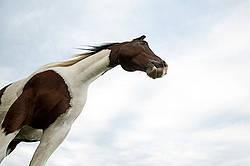 Paint horse photographed against sky