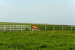 quarter horse on summer pasture