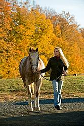 Young woman leading Appaloosa horse in from the field