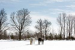 Two horses standing in a snowy field