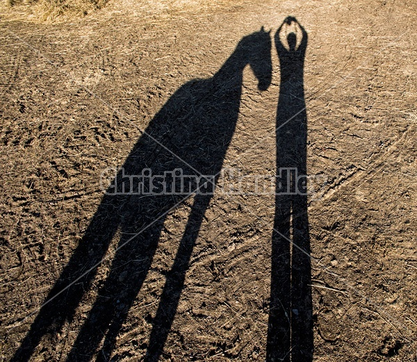 Shadow of person and horse
