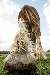 Closeup photo of a horses leg and hoof