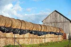 Round bales of hay and barn