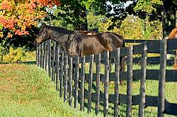 Horse looking over paddock fence